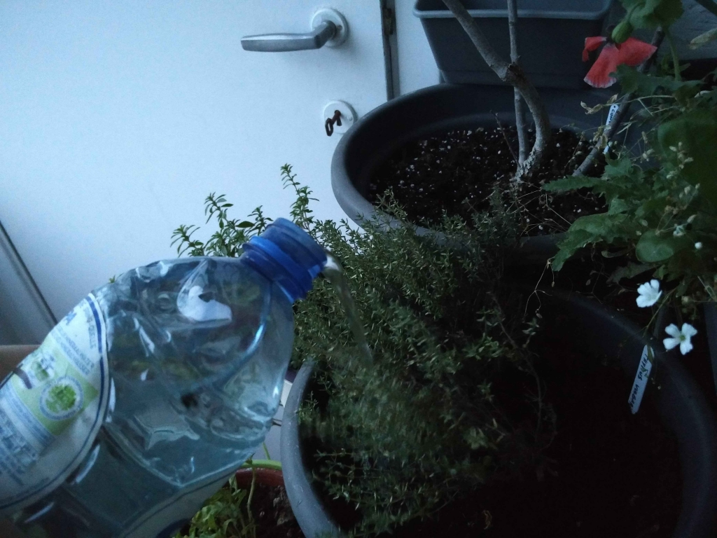 aquaponic manual watering system